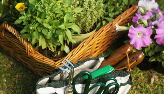 Greening your garden