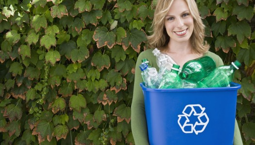 Is going green costly or budget-friendly?