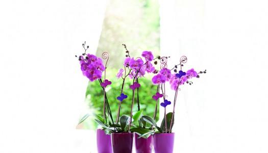 Dandylion orchid gift set giveaway