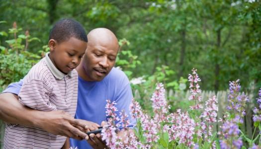 Kids gardening – pruning safely