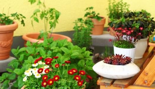 Rooftop garden basics