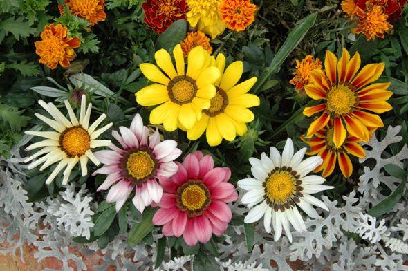 february flowers wu fan