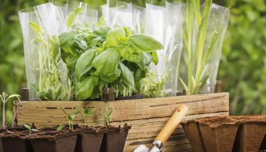 Grow a windowsill herb garden