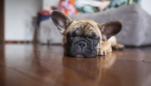 Tips for living with pets