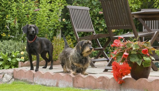 The canine-friendly garden
