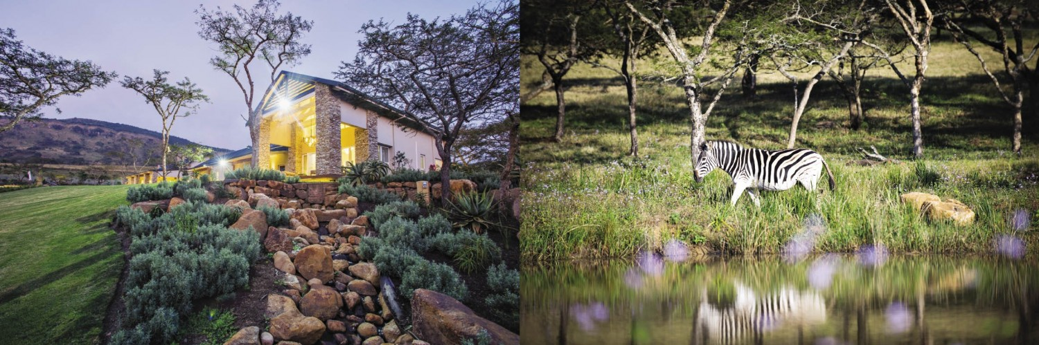 Into the wild - Nature integrated houses perfect harmony ...