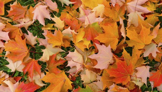 Tackling autumn leaves