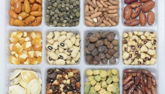 How to buy seeds for your garden