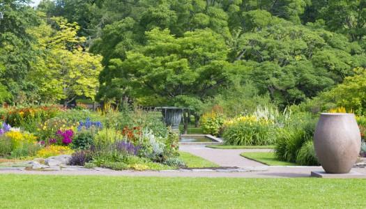 The drought-tolerant garden