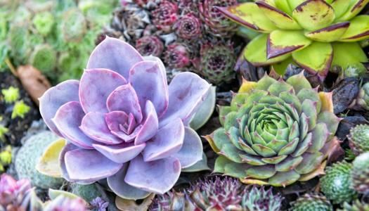 Winning plant displays