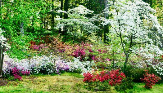 Choosing a landscaper