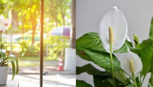 Your new best plant friends