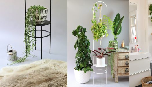 Bring greenery indoors