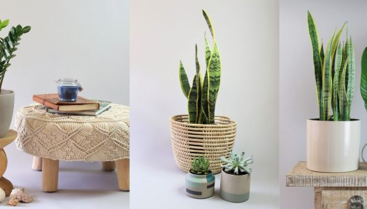 All about indoor plants